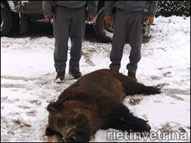 Corpo Forestale dello Stato di Rieti, controlli contro la caccia di frodo